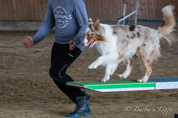 Agility Münsterland Cup 2019 Wippe