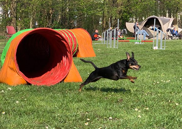Agility Old and Teens 2019