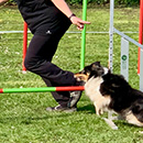 Agility Old and Teens 2019 EF