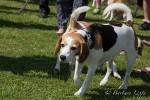 Jubiläum Beaglespielplatz-4