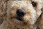 Hunderennen-7