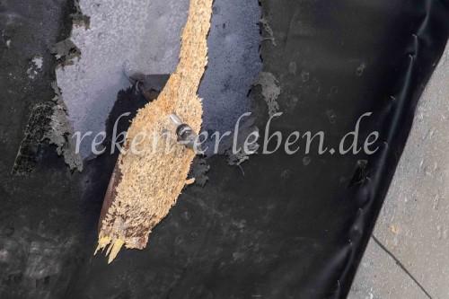 SchF MV Vogelstange 2019-32